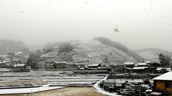 雪の釜塚の茶畑